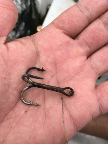 Rusted treble hook